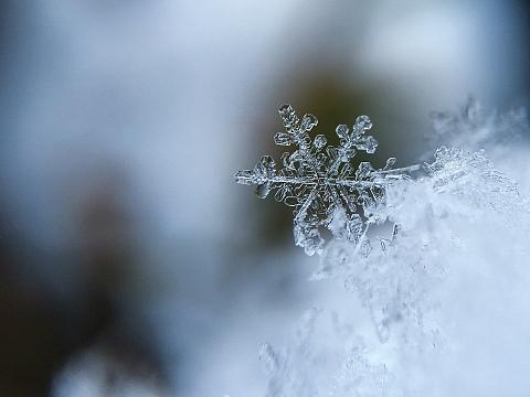 Beugen Sie Frostschäden frühzeitig vor, sonst kann es teuer werden. Bild: Free P